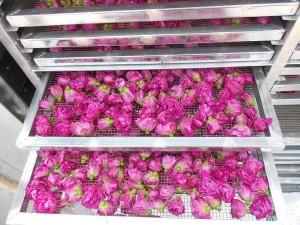 湖北玫瑰花烘干设备